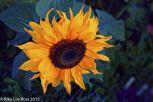 Aurinko syyskuussa